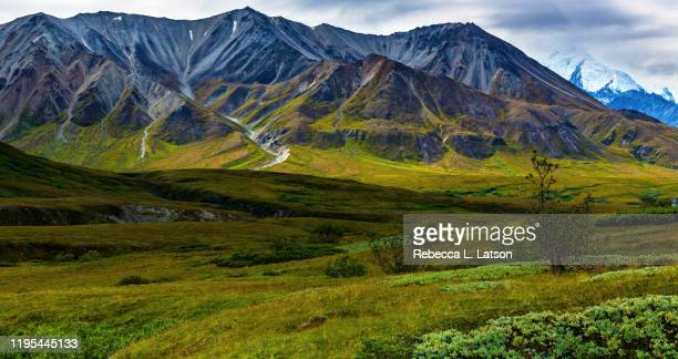 mountain scenery in denali national park - tundra stock pictures, royalty-free photos & images
