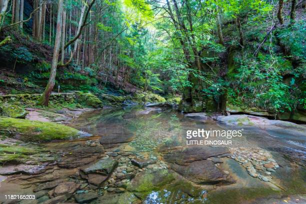 mountain stream and green forest. akame 48 waterfalls, mie, japan - 三重県 ストックフォトと画像