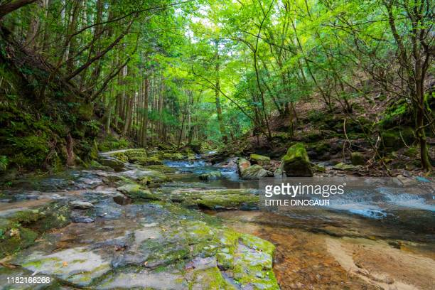 mountain stream and green forest. akame 48 waterfalls, mie, japan - 峡谷 ストックフォトと画像