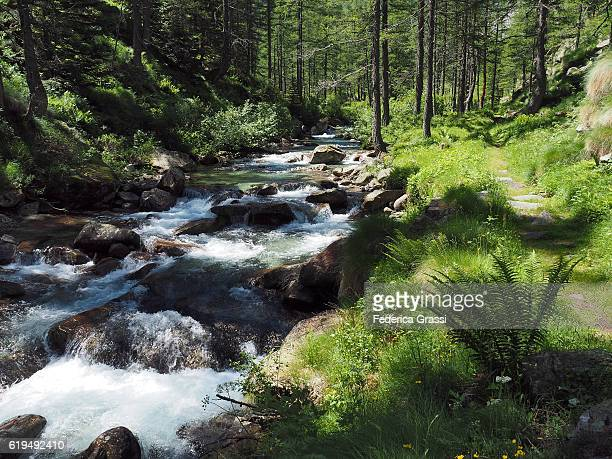 Mountain Stream And Hiking Trail In The Natural Park Of The High Antrona Valley