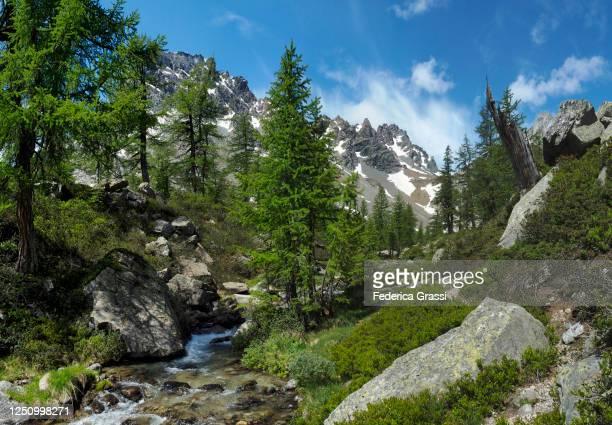 mountain stream at alpe di valdeserta with lepontine alps in the background - valle foto e immagini stock