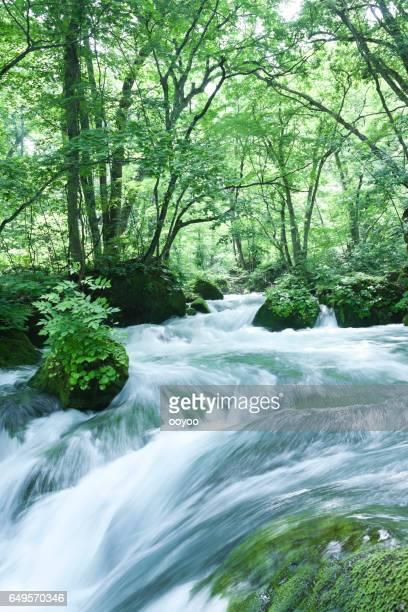 Mountain Stream Flow through Lush forest Plants