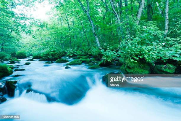 mountain stream flow through lush forest plants - spring flowing water stock pictures, royalty-free photos & images