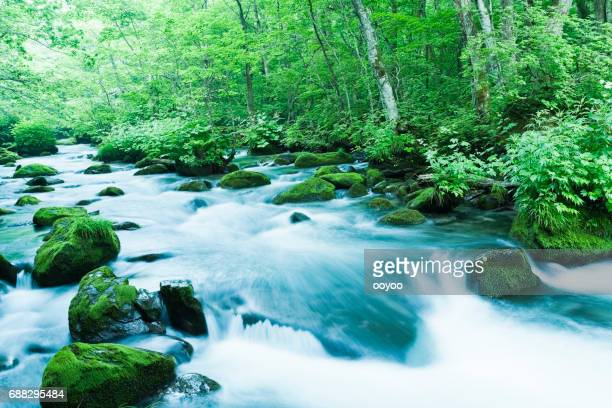 mountain stream flow through moss covered rocks in the morning - spring flowing water stock pictures, royalty-free photos & images