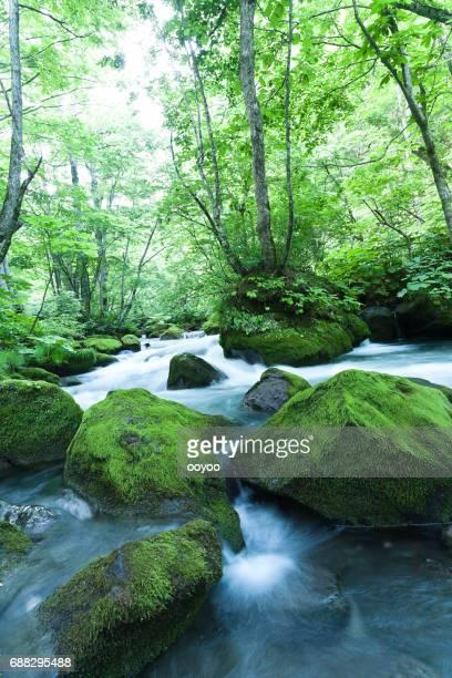 Mountain Stream stromen door mos bedekt rotsen