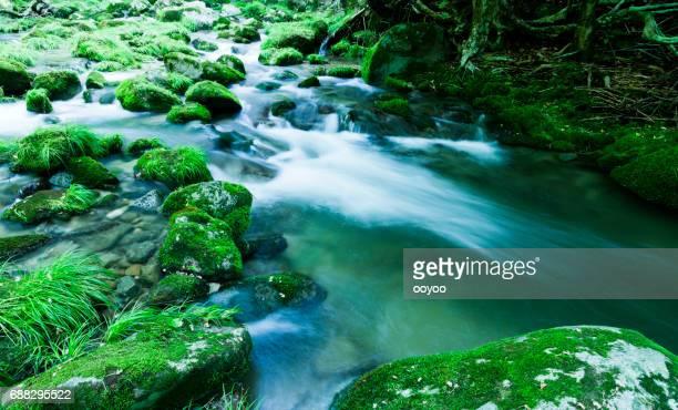 渓流の流れるコケ覆われた岩 - 茨城県 ストックフォトと画像
