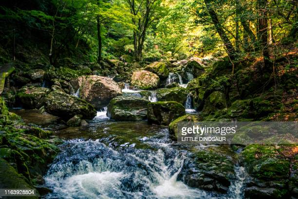 mountain stream flowing in deep forest. at the akame 48 waterfalls - 峡谷 ストックフォトと画像