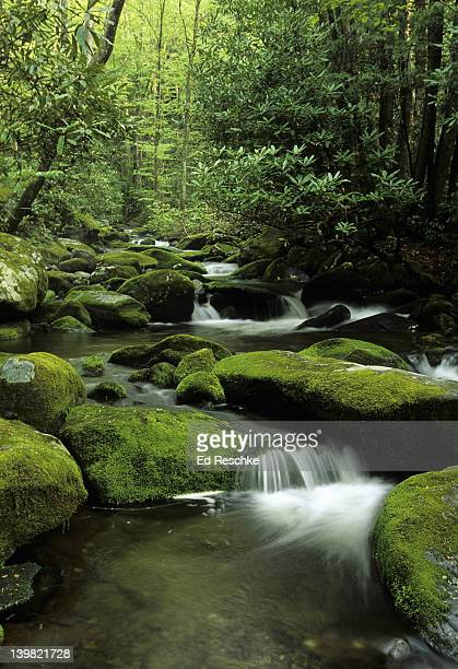 mountain stream. great smoky mountains national park. moss covered boulders and rhododendron. near the roaring fork motor nature trail, gatlinburg, tennessee. - roaring fork motor nature trail stock pictures, royalty-free photos & images