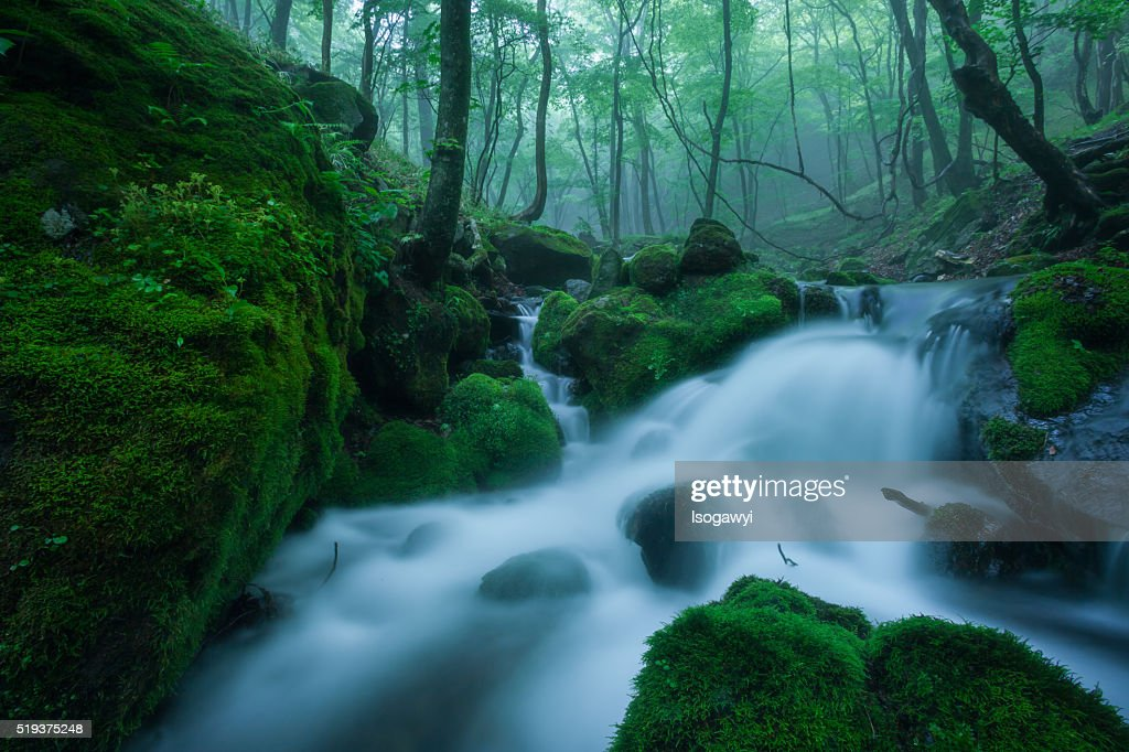 Mountain Stream In Early Summer : ストックフォト