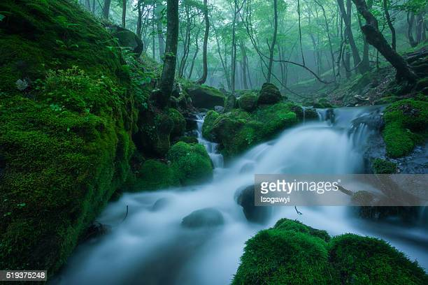 mountain stream in early summer - isogawyi ストックフォトと画像