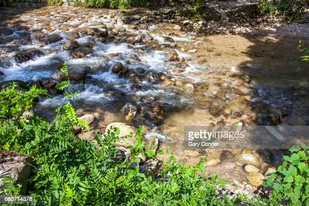 mountain stream in park - 佐賀県 ストックフォトと画像