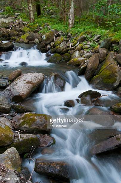 mountain stream in the spring, great smoky mountains national park, roaring fork motor nature trail, tennessee, usa - roaring fork motor nature trail stock pictures, royalty-free photos & images