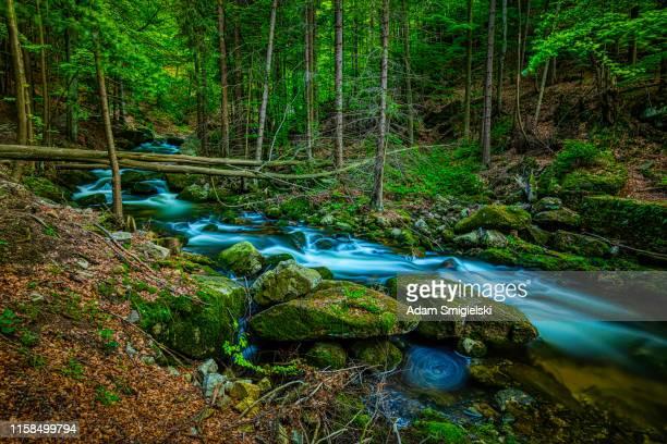 corriente de montaña (hdri) - agua descendente fotografías e imágenes de stock