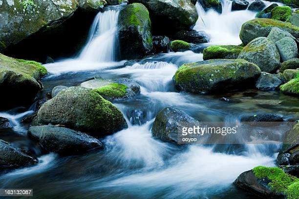 mountain stream - spring flowing water stock pictures, royalty-free photos & images