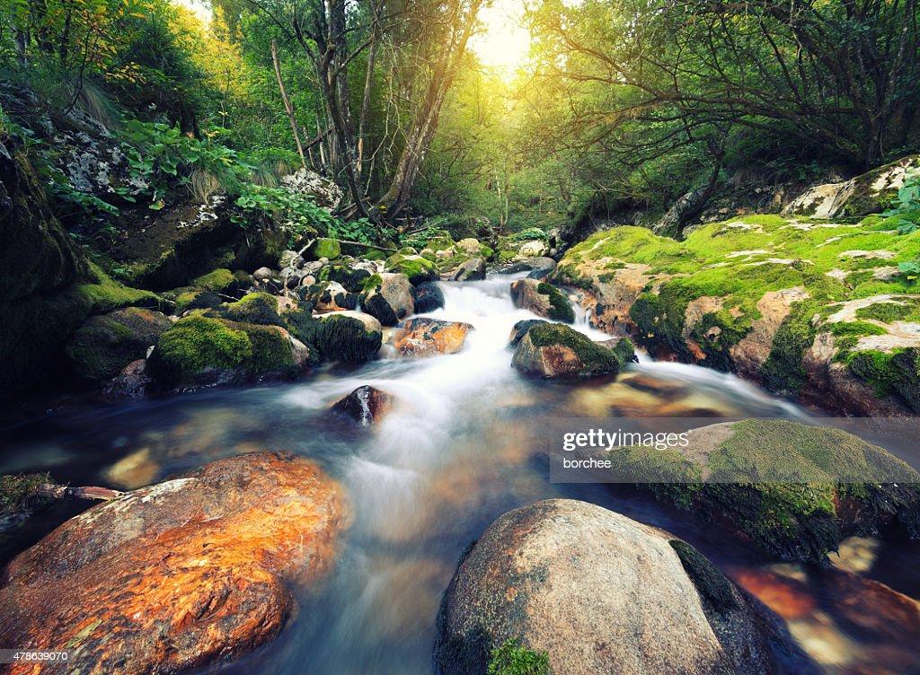 Mountain Stream : Stockfoto