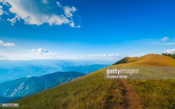mountain trail through grassy brush on background blue sky in summer. - 自然美 ストックフォトと画像