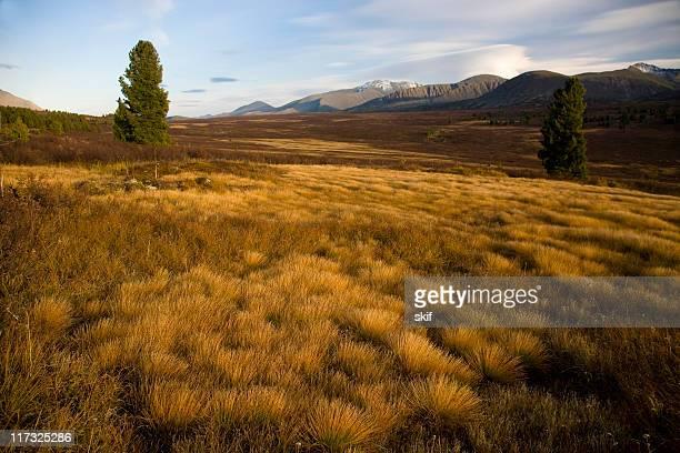 tundra della montagna - tundra foto e immagini stock