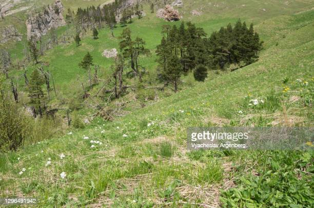 mountain valley in green, caucasus biosphere reserve - argenberg stock pictures, royalty-free photos & images