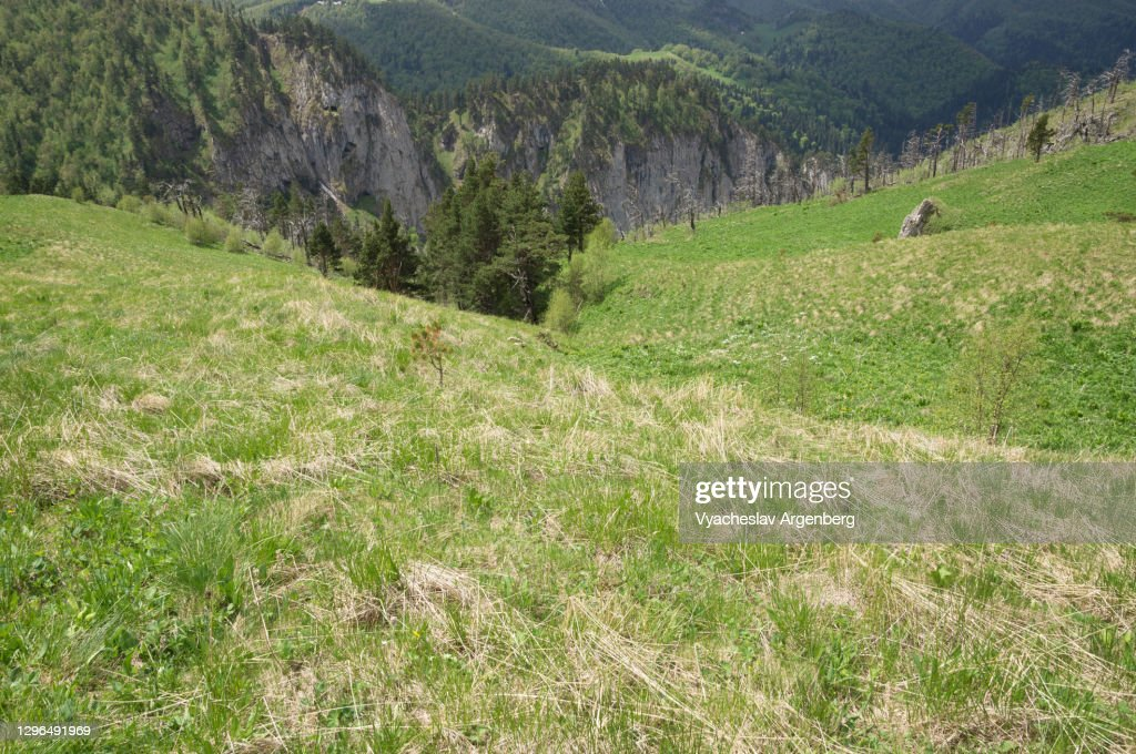 Mountain valley in green, Caucasus Biosphere Reserve : Stock Photo