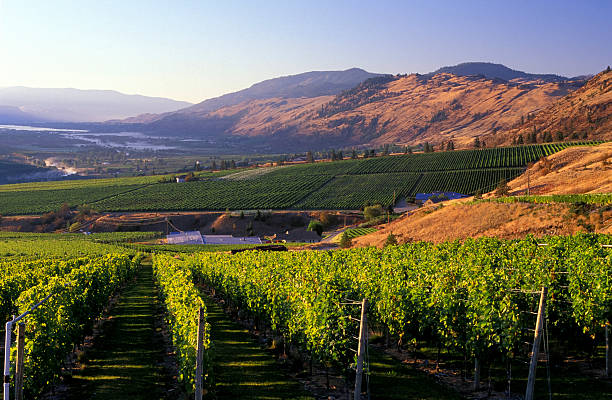 okanagan valley vineyard winery