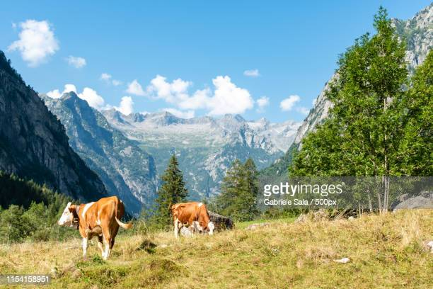 mountain view - day of the week stock pictures, royalty-free photos & images