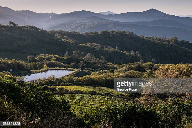 A mountain vineyard in the Cloverdale Pine Mountain Viticultural Appellation is viewed on May 8 near Healdsburg California With nearly all the...