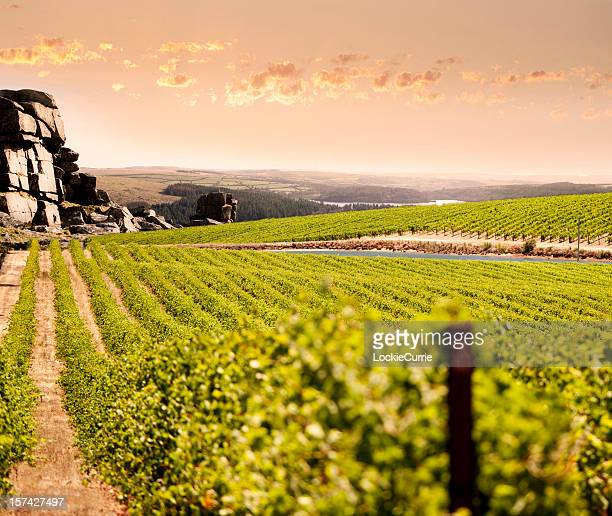 mountain vineyard - adelaide stock pictures, royalty-free photos & images