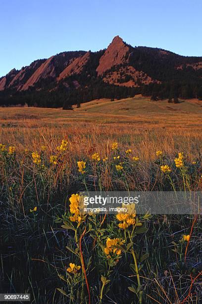 mountain wildflower sunrise meadow