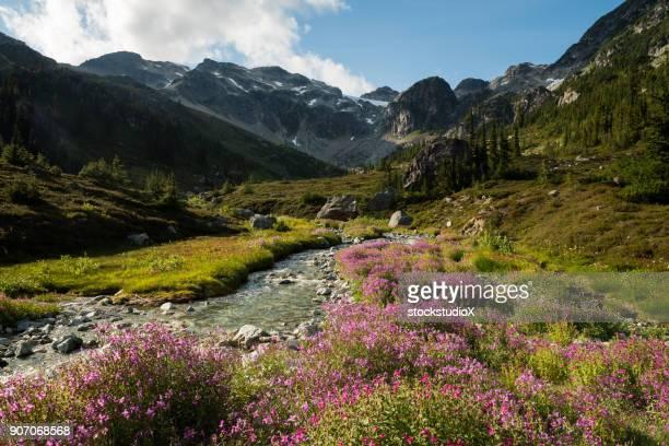 Flores silvestres de la montaña en flor