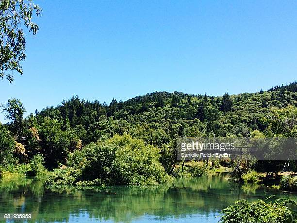 mountain with trees by lake against clear sky - reid,_wisconsin stock pictures, royalty-free photos & images