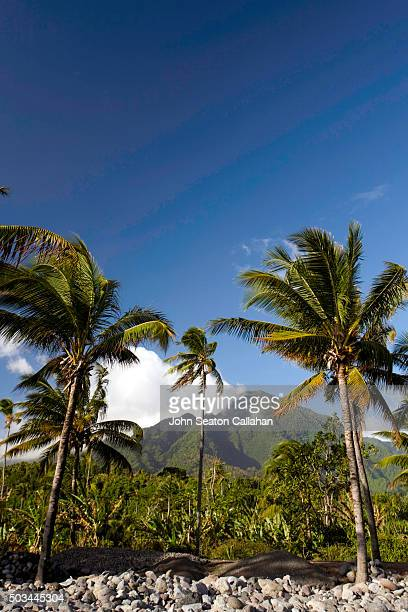 Mountains and Coconut Palms