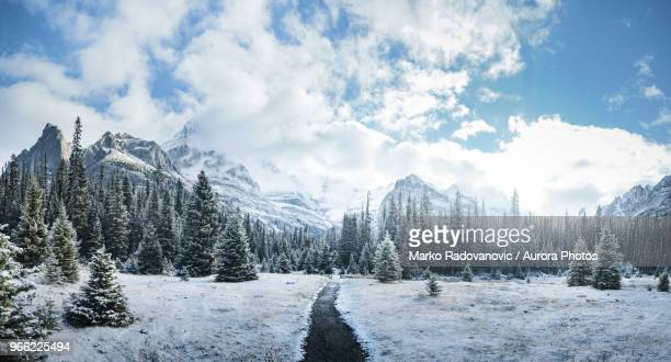 mountains and forest in winter, yoho national park, field, british columbia, canada - paisajes de canada fotografías e imágenes de stock