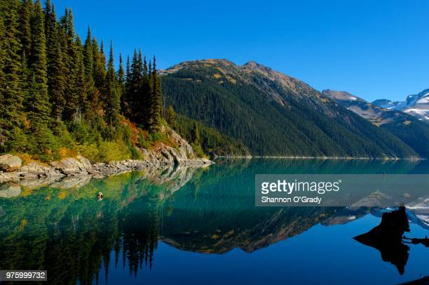 mountains and forest reflecting in lake under clear blue sky, vancouver, british columbia, canada - garibaldi park stock pictures, royalty-free photos & images