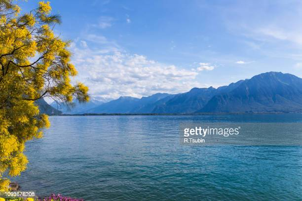 mountains and lake geneva from the embankment in montreux. switzerland - montreux stock pictures, royalty-free photos & images