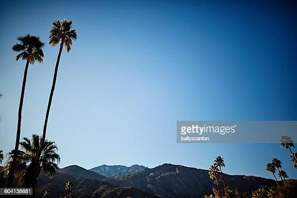 Mountains and palm trees in Palm Springs