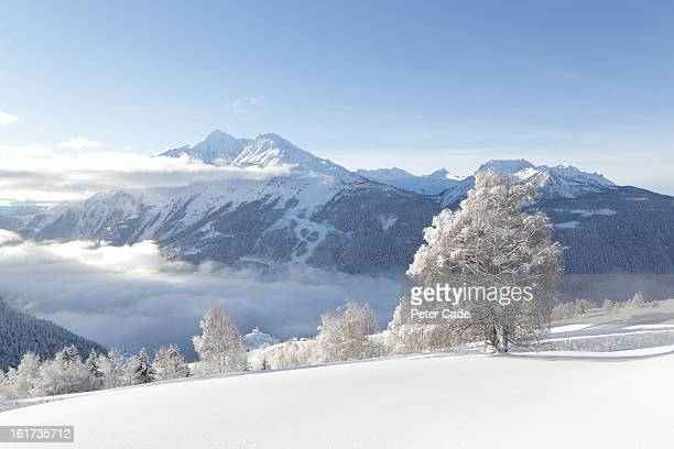 Mountains and trees covered in snow
