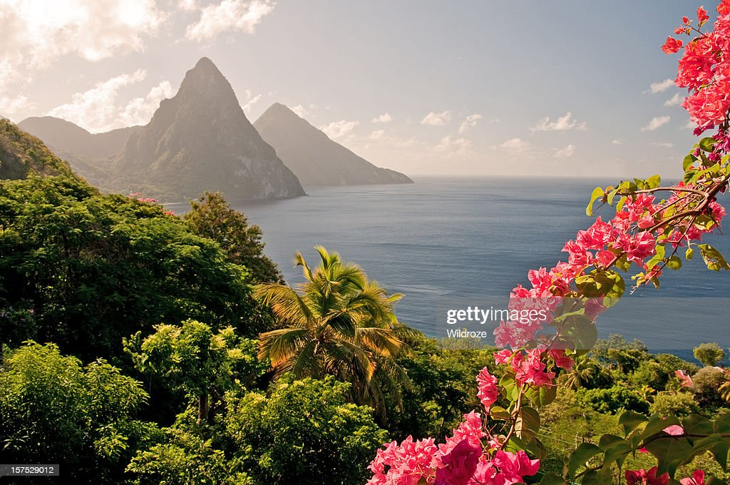 Mountains by the ocean in St Lucia with pink flowers : Stock Photo