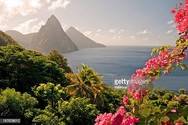 Mountains by the ocean in St Lucia with pink flowers