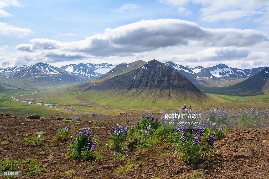 Mountains, Icland west fjords : Stock Photo