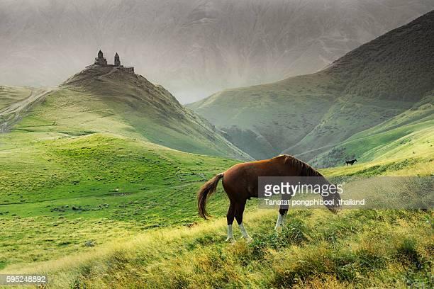 mountains of kazbegi in georgia. - kaukasus geografische lage stock-fotos und bilder