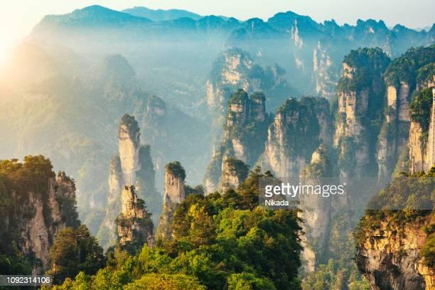 mountains of zhangjiajie national forest park, china - conifera foto e immagini stock