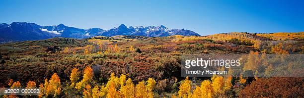 mountainside forests in autumn - timothy hearsum imagens e fotografias de stock