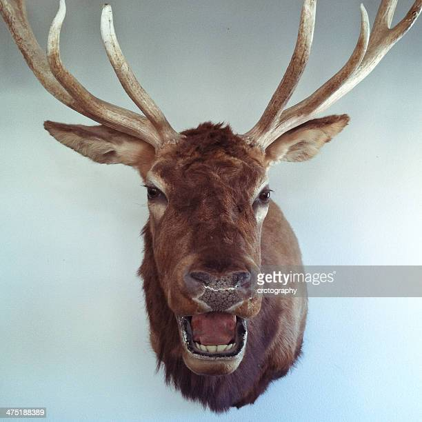 Mounted deer head on a wall
