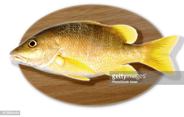 mounted fish trophy - big fish stock pictures, royalty-free photos & images