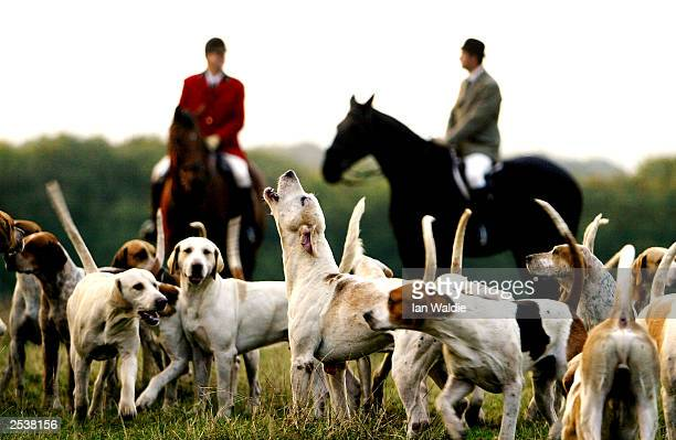 Mounted huntsmen ride with their foxhounds at the Old Surrey Burstow West Kent Hunt September 26, 2003 in Mark Beech, England. The hunting with dogs...