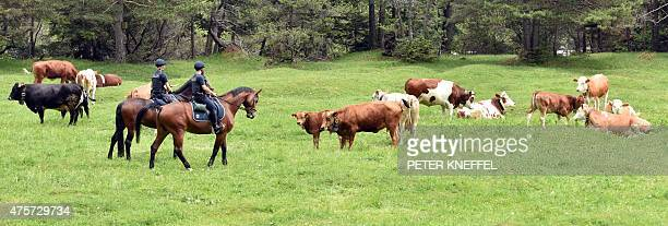 Mounted police ride past cows as they secure the area near Mittenwald at the German-Austrian border on June 3 four days before the start of the G7...