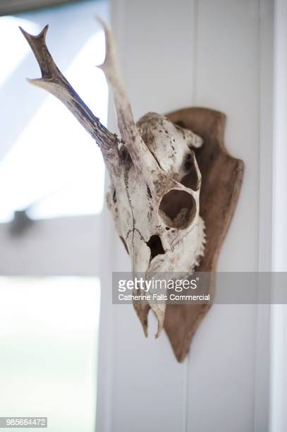 60 Top Deer Skull Pictures, Photos, & Images - Getty Images