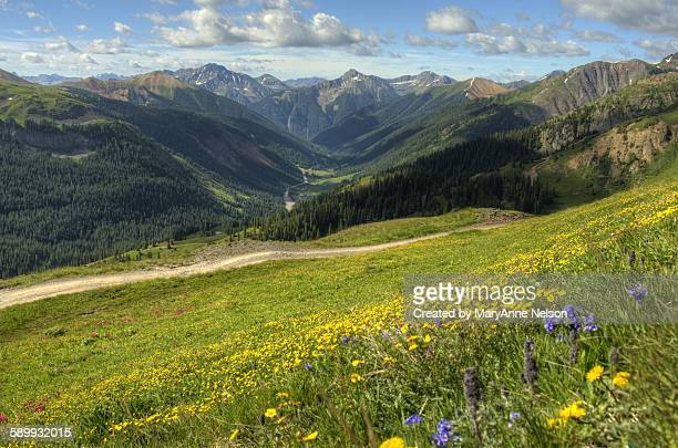 mountian hillside on black bear - bear tracks stock pictures, royalty-free photos & images