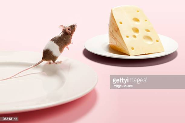 Mouse and cheese on plate