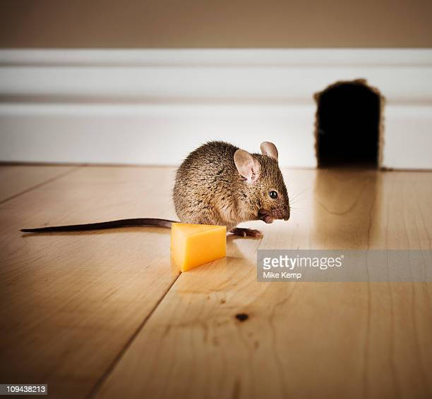 Mouse and cheese wedge in front of mouse hole